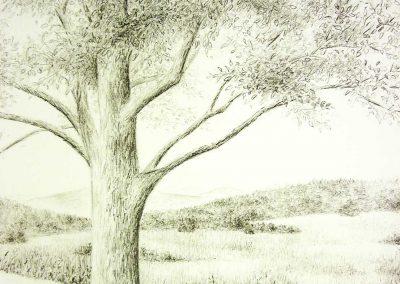 Zeichnung-Baum-Roemerweg-400x284 Einzelgalerie