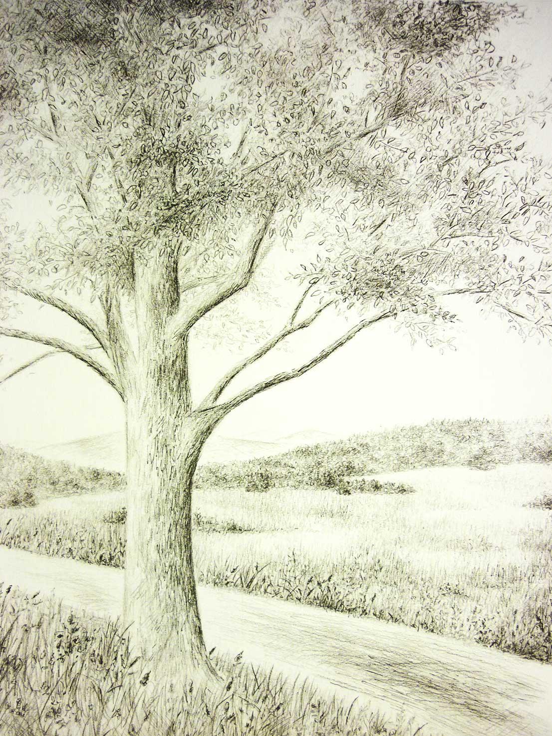 Zeichnung-Baum-Roemerweg Atelier